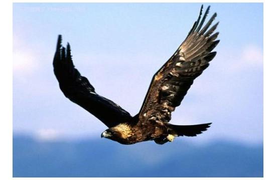 紫外灯竟然可减少鸟类碰撞